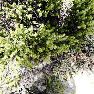 Wild bush