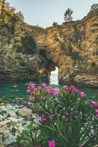 Blooming Rhododendron tree in picturesque sea bay Turkey