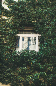 Building facade with window surrounded with lush ivy