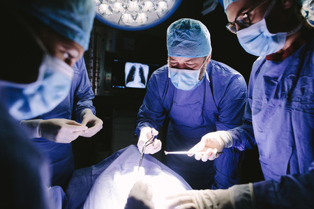 Team of professional surgeons performing surgical procedure