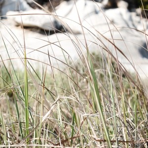 Wild grass