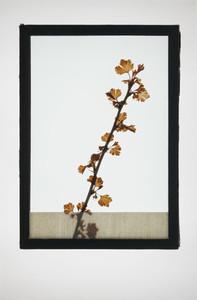 Botanical Frames 01