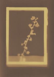 Botanical Frames 02