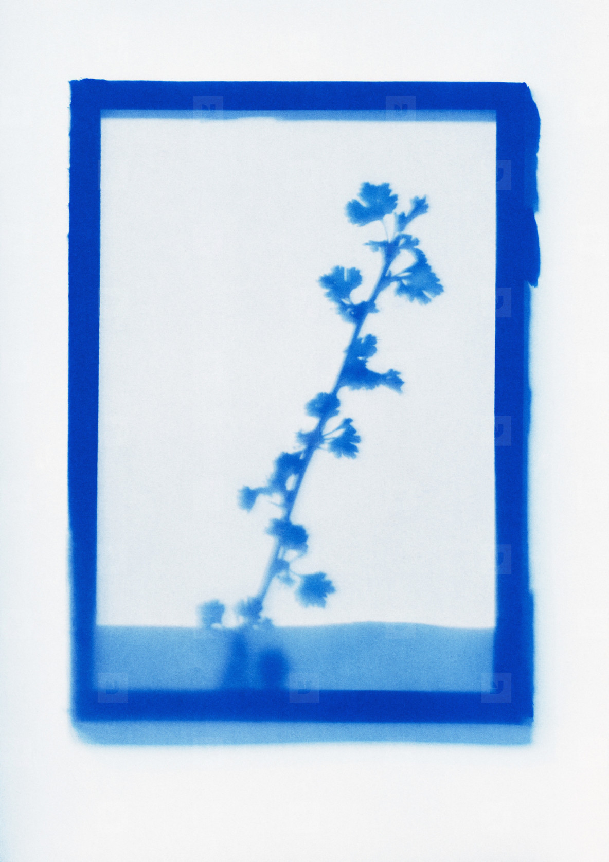 Botanical Frames  03