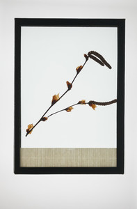 Botanical Frames 04