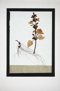 Botanical Frames 07