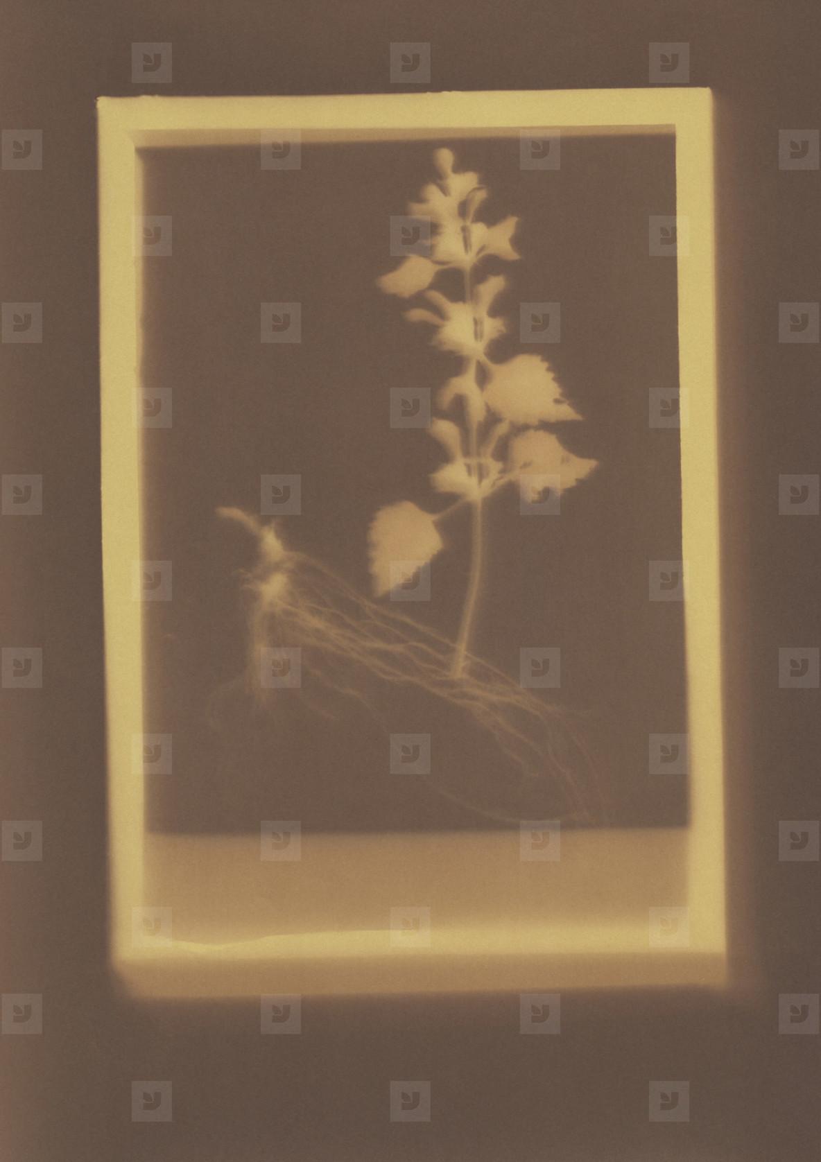 Botanical Frames  08
