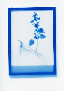Botanical Frames 09