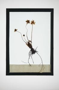 Botanical Frames 10