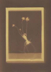 Botanical Frames 11