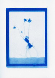 Botanical Frames 12