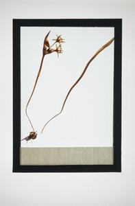 Botanical Frames 13