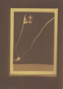Botanical Frames 14