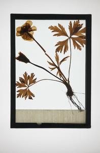 Botanical Frames 16