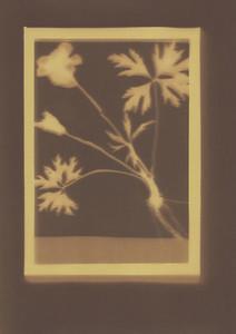 Botanical Frames 17
