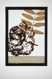 Botanical Frames 19