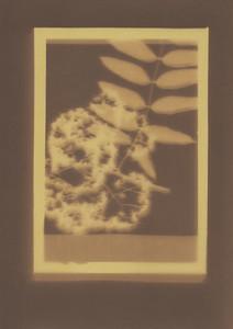 Botanical Frames 20