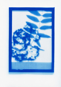 Botanical Frames 21