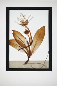 Botanical Frames 22