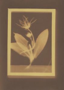 Botanical Frames 23