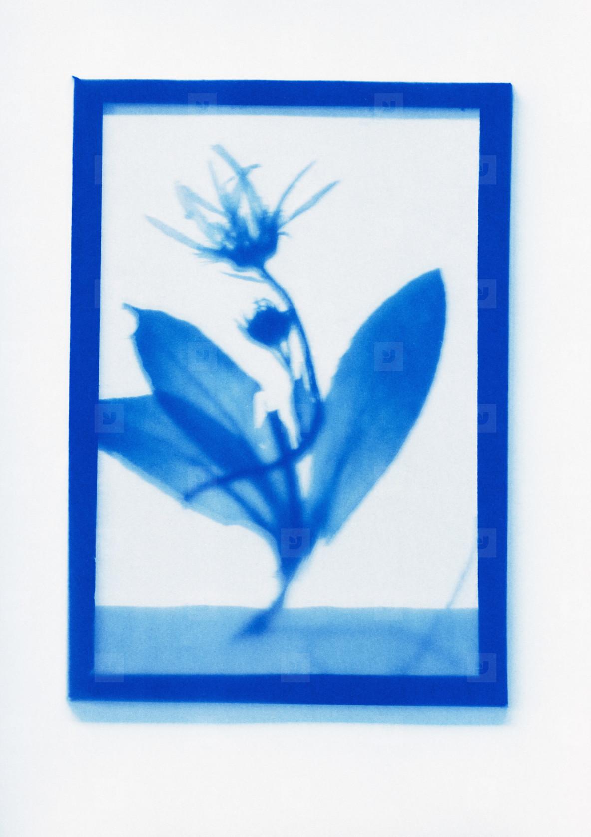 Botanical Frames  24