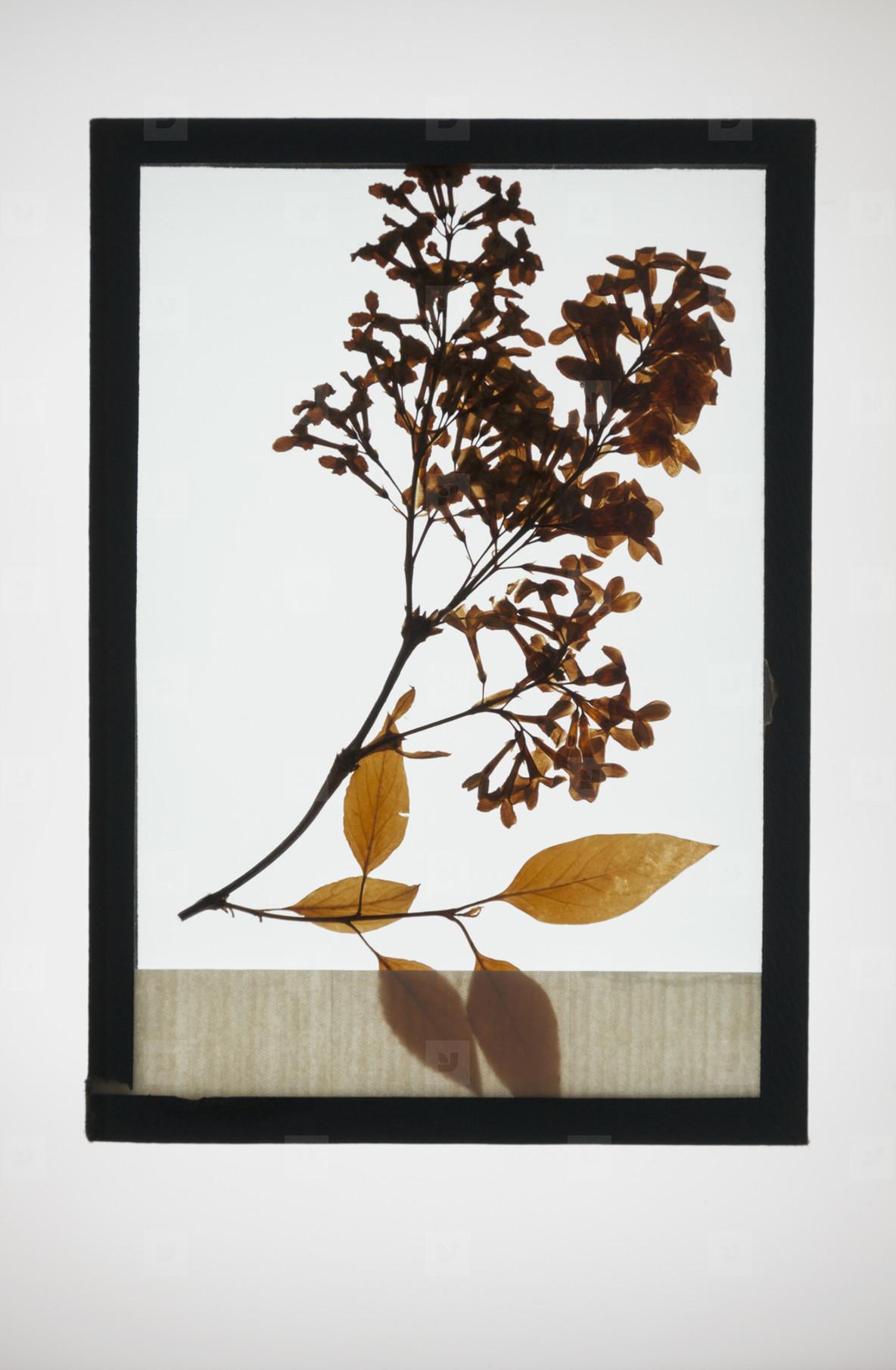 Botanical Frames  25