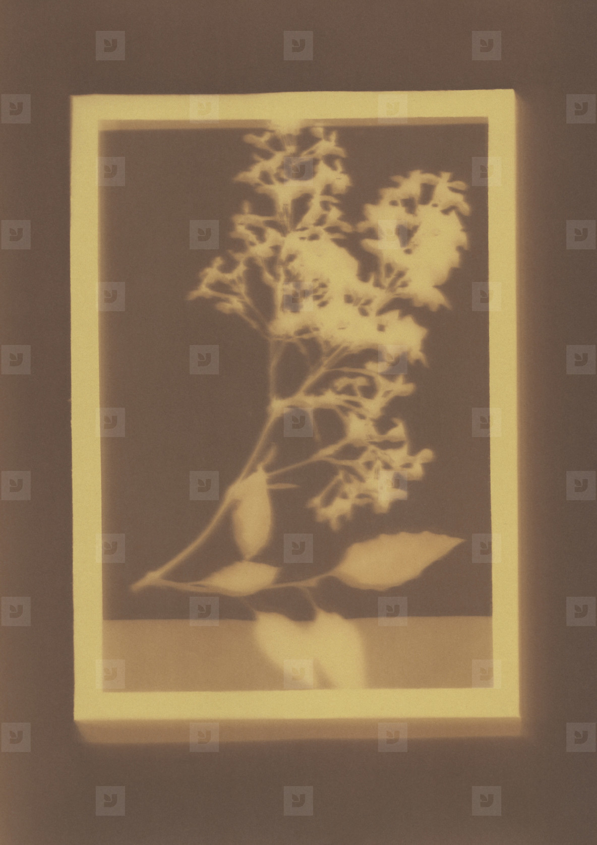 Botanical Frames  26