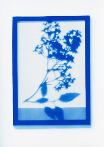 Botanical Frames 27