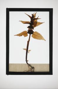 Botanical Frames 28