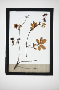 Botanical Frames 31