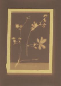 Botanical Frames 32