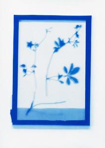 Botanical Frames 33