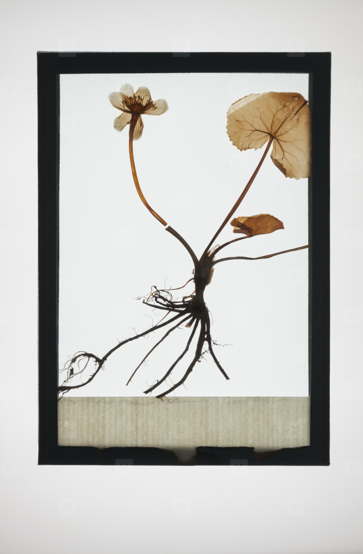 Botanical Frames  34