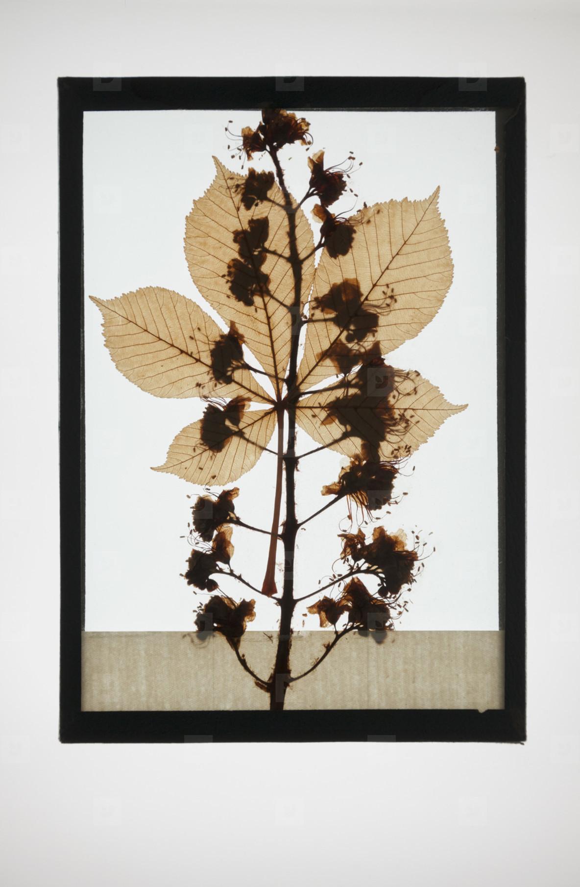 Botanical Frames  37