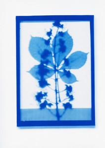 Botanical Frames 39