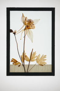 Botanical Frames 40