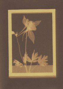 Botanical Frames 41
