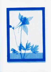 Botanical Frames 42