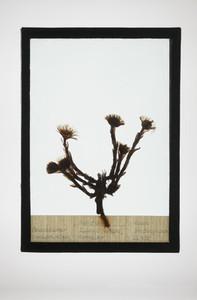 Botanical Frames 43