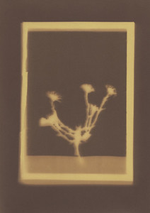Botanical Frames 44