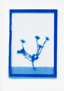 Botanical Frames 45