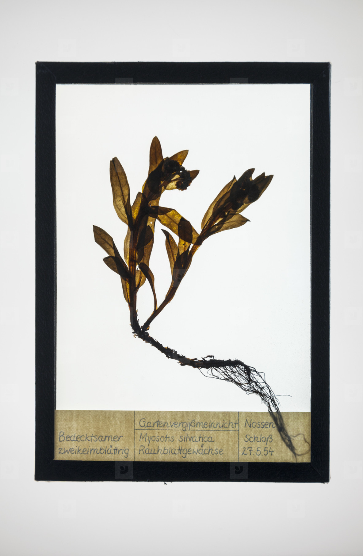 Botanical Frames  46