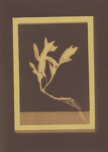 Botanical Frames 47