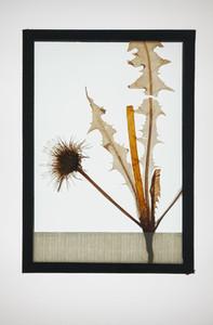 Botanical Frames 49