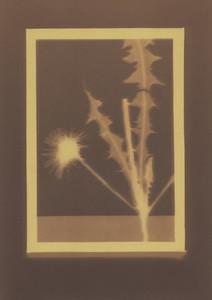 Botanical Frames 50