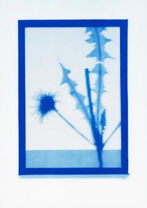 Botanical Frames 51