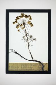 Botanical Frames 52