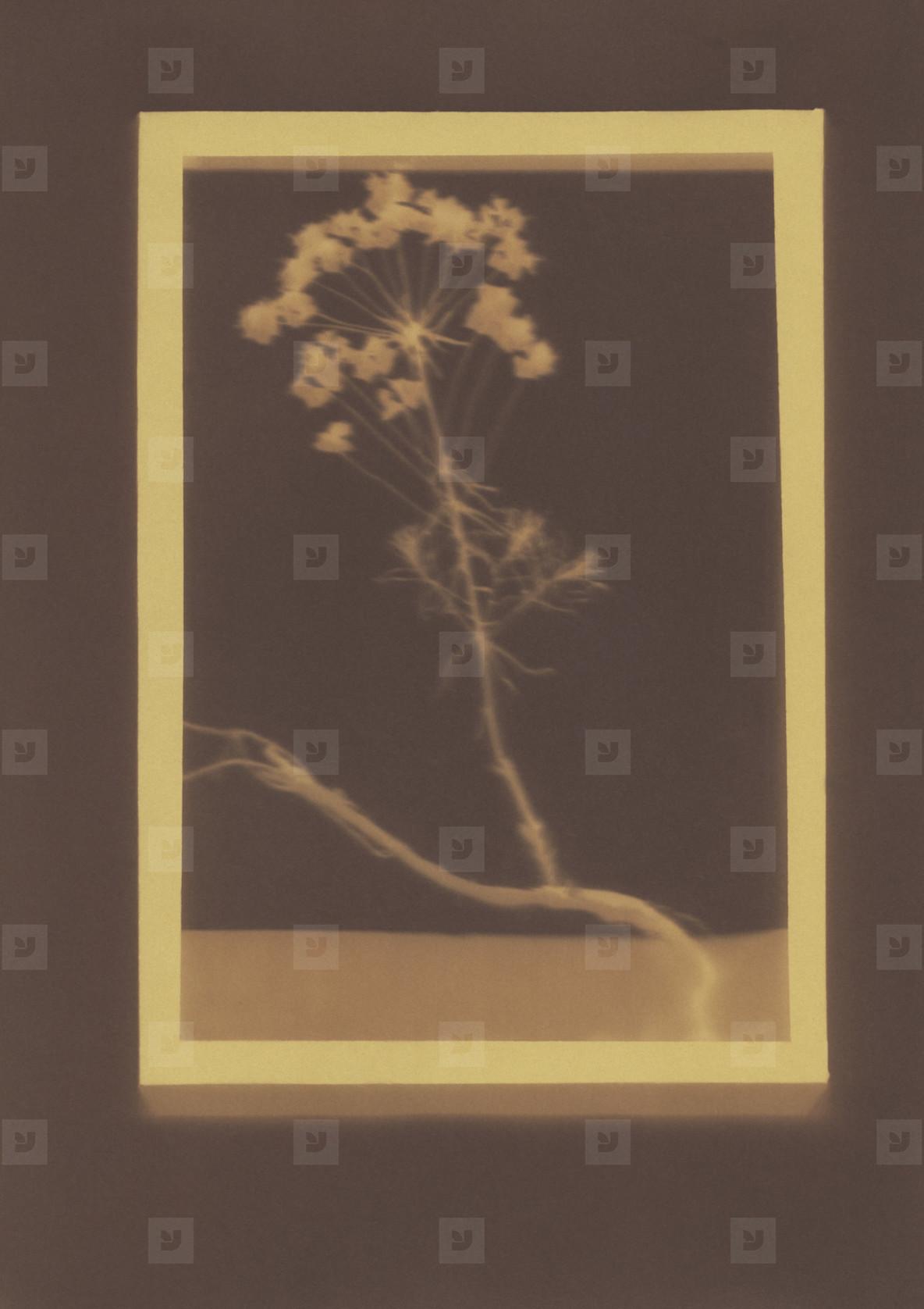 Botanical Frames  53