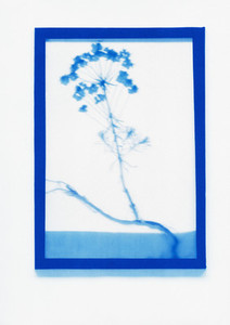 Botanical Frames 54