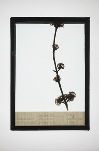 Botanical Frames 55